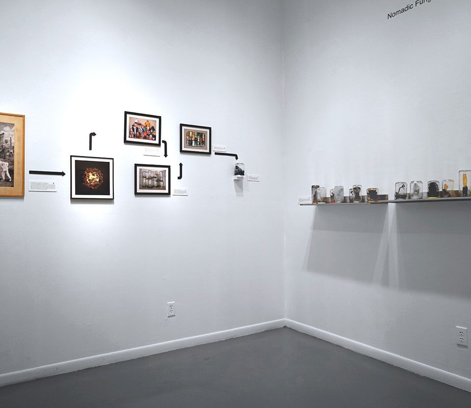 """Nomadic Fungi Institute, headed by Brad Ford Smith, """"Roadside Snacks"""", installation view at the Art Car Museum, 2018"""